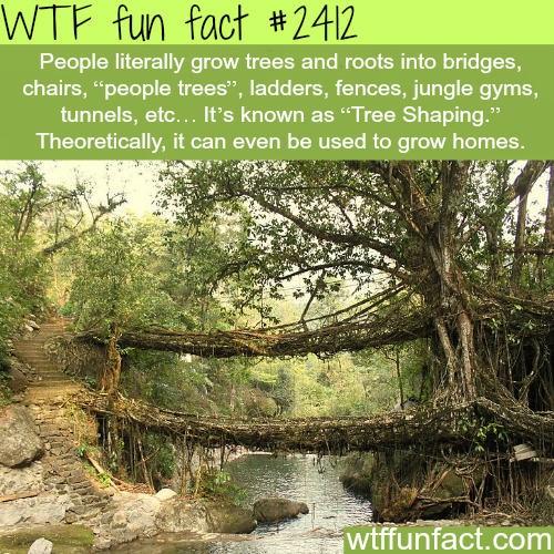 People manipulate tree roots - WTF fun facts