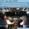 percentage of pilots who fell asleep while flying