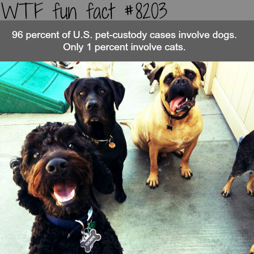 Pet-custody cases mostly involves dogs - WTF fun fact