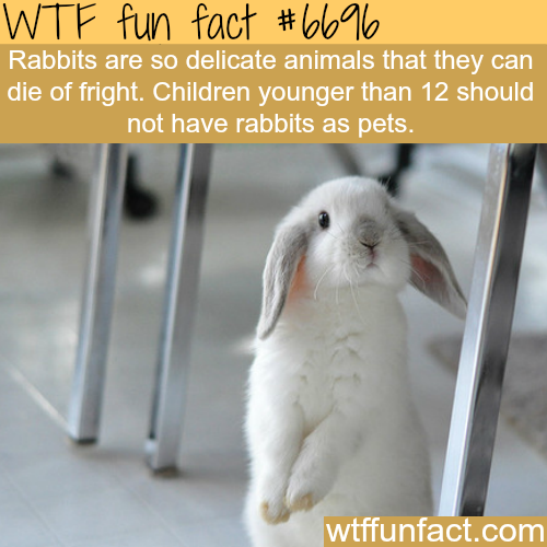 Pet rabbit - WTF fun fact