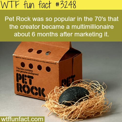 Pet Rock -WTF fun facts