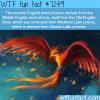 phoenix wtf fun fact