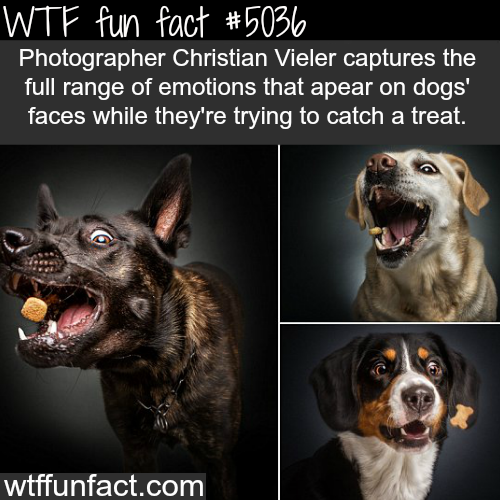 Photographer captures the face of dogs before catching a treat - WTF fun facts