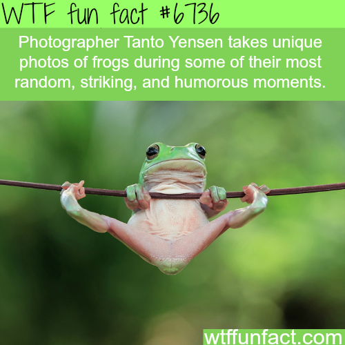 Photographs by Tanto Yensen - WTF fun fact