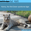 picture of the first down syndrome tiger