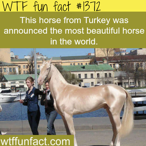 pictures of the most beautiful horse in the world