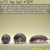 pill bugs wtf fun facts