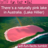 pink lake australia lake hillier