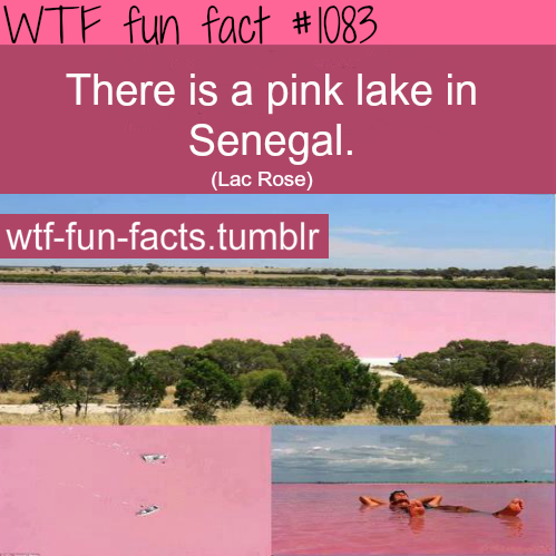 pink lake in Senegal - Lake_Retba ( Lac Rose)