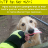 pippa the dog wtf fun facts