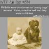 pit bulls nanny dogs