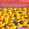 plastic ducks float halfway across the world