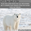 polar bears liver wtf fun fact