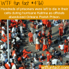 prisoners left to die during hurricane katrina