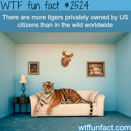 Privately owned tigers - WTF fun facts