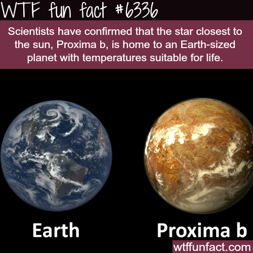 Proxima b - WTF fun facts
