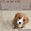 puppy eyes facts
