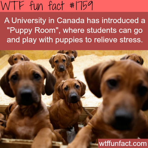 """Puppy Room"" for students in a University in Canada  - WTF fun facts"