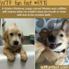 puppy wearing braces wtf fun facts