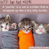 purrito wtf fun facts