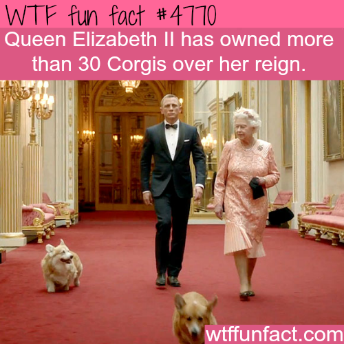 Queen Elizabeth's corgis - WTF fun facts