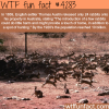 rabbits in australia wtf fun facts