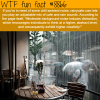 rainycafecom wtf fun facts
