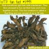 rat king wtf fun facts