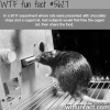 rats are nicer than you wtf fun fact