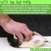 rats laugh when you tickle them
