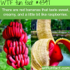 red bananas that taste like raspberries wtf