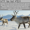 reindeer wtf fun fact
