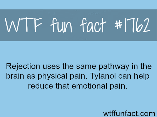 Rejection and physical pain - WTF fun facts