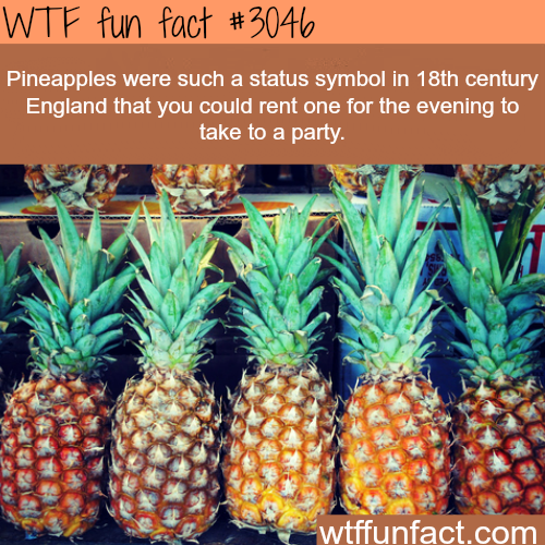 Rent a pineapple -  WTF fun facts