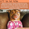rescue dog cant stop smiling wtf fun facts