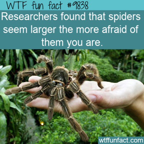 Spiders Seem To Be Getting More >> Researchers Found That Spiders Seem Larger The Wtf Facts