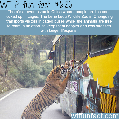Reverse zoo in China - WTF fun facts