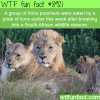 rhinos poachers wtf fun facts