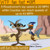 roadrunner cartoon