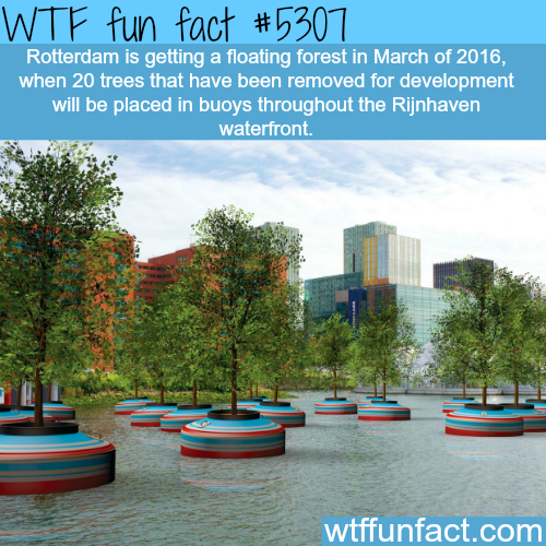 Rotterdam's floating forest - WTF fun facts