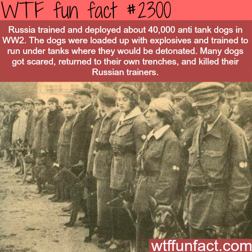 Russian Anti tank dogs - WTF fun facts