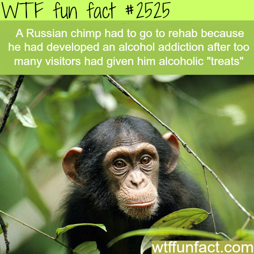 Russian Chips taken to rehab for drinking - WTF fun facts