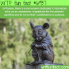 russian monument dedicated to lab mice wtf fun