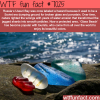 russias ussuri bay wtf fun facts