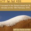sahara snow 1979