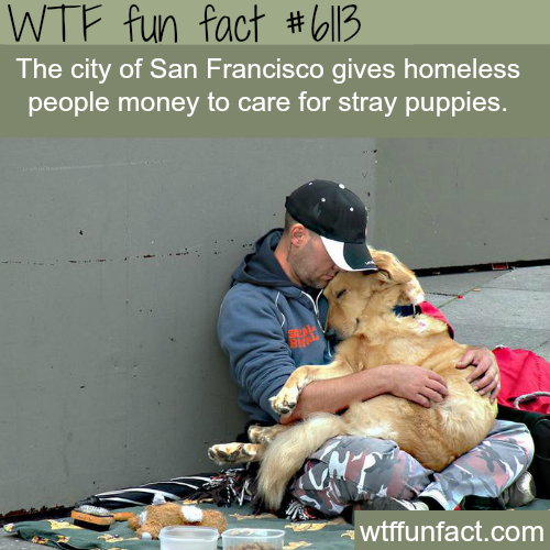San Francisco - WTF fun facts