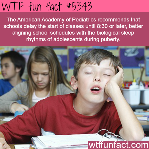 Schools start too early - WTF fun facts