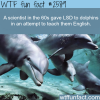 scientist gave lsd to dolphins