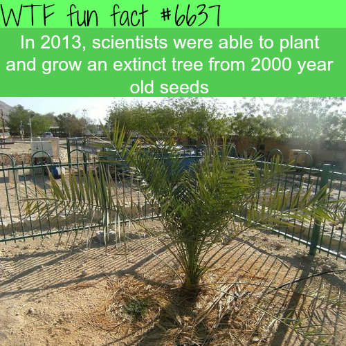 Scientist grew an extinct tree from 2000 year old seeds - WTF fun facts
