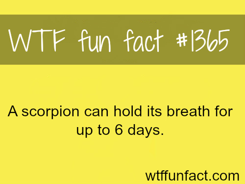 A scorpion can hold its breath for 6 days / animals facts